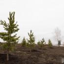 Дань Году экологии. В Магнитогорске высаживали деревья, сокращали выбросы и убирались на улицах
