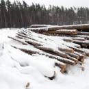 В Воронежской области за 2018 год зарегистрировали 100 экологических преступлений
