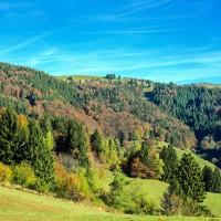Нацпроект «Экология»: на сохранение лесов Пензенской области выделено около 40 миллионов рублей