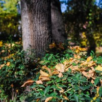 Волгоградская область примет участие во всероссийском экомарафоне