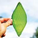 Футурама: как мох, планктон и биомельницы помогут сделать воздух столицы чище
