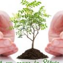 Экострахование — инструмент управления экологическим рисками