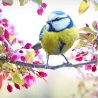 Ежегодно 1 апреля отмечается Международный день птиц (International Bird Day) — интернациональный экологический праздник. Его цель — сохранение видового разнообразия и численности птиц.